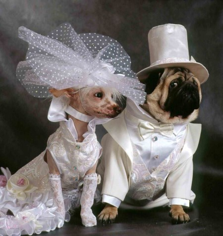 Za_chi_dengi_pokupaetsja_svadebnoe_plate2